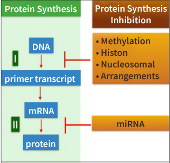 New Bio-Markers: Cell-Free DNAs and MICRO-RNAs
